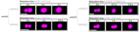 LUMICKS荧光光镊系统在相分离研究领域的应用
