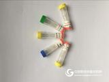 MAdCAM-1抗体,粘膜血管定居因子抗体价格