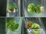 《植物组织培养》课程资源包-教学实践课程