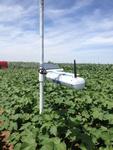 SapIP-IRT 无线红外叶温测量系统