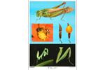 昆虫足型教学挂图