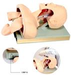 人体气管插管训练模型