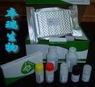 鲑鱼补体蛋白3(C3)Elisa试剂盒