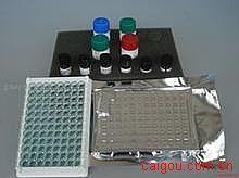人游离三碘甲状腺原氨酸(Free-T3)ELISA试剂盒