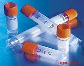 肺组织磷酸胆碱二胞苷酰转移酶(CCT)抗体