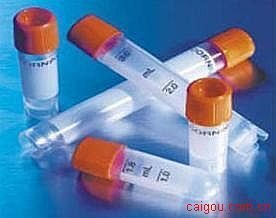 神经生长相关蛋白-43(抗体)价格,GAP-43(Growthassociated