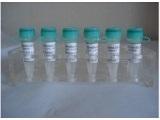 丙氨酸蛋白激酶C底物Marcks抗体