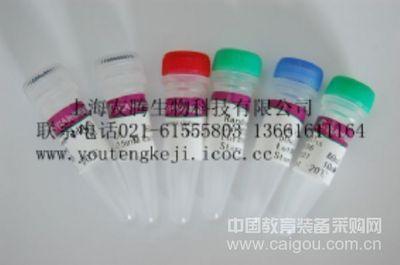 性激素  ELISA试剂盒