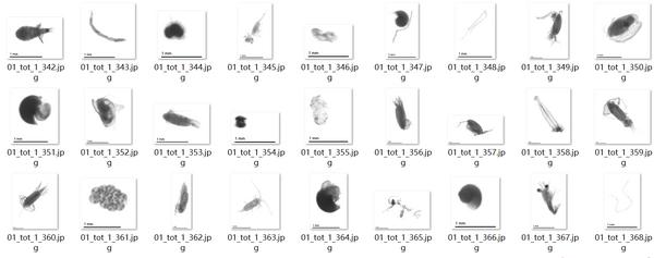水德浮游生物大数据平台