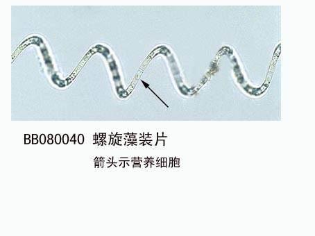 鑫鑫教学生物切片