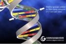ctDNA与癌症早筛,这项新突破是否会带来颠覆?