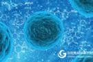 干细胞新用途:科学家找到肌肉再生的方法