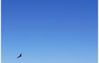 EcoDrone无人机遥感技术