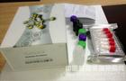 食品安全检测ELISA试剂盒