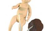 高级新生儿脐带护理模型