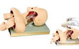 帶解剖結構的成人氣管插管操作模型