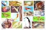 动物世界成员教学挂图