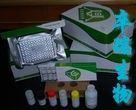 大鼠水通道蛋白5(AQP-5)Elisa试剂盒