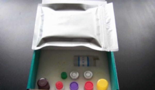 兔子组织因子(TF)ELISA试剂盒