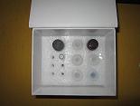 糖化白蛋白ELISA试剂盒厂家代测,进口人(GA)ELISA Kit说明书