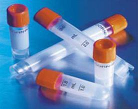 磷酸化增殖细胞核抗原抗体|phosphos-PCNA (Tyr211)抗体