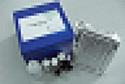 代测小鼠颗粒酶A(Gzms-A)ELISA试剂盒价格