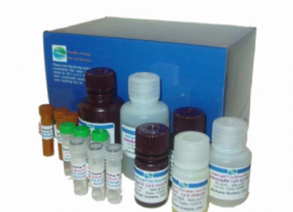 人高香草酸(HVA) ELISA试剂盒  规格