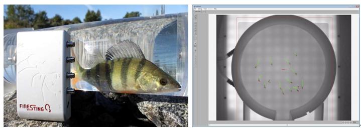 鱼类行为与能量代谢研究技术快讯