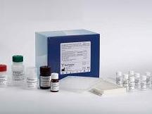 大鼠烟碱型乙酰胆碱受体(N-AChR)ELISA试剂盒