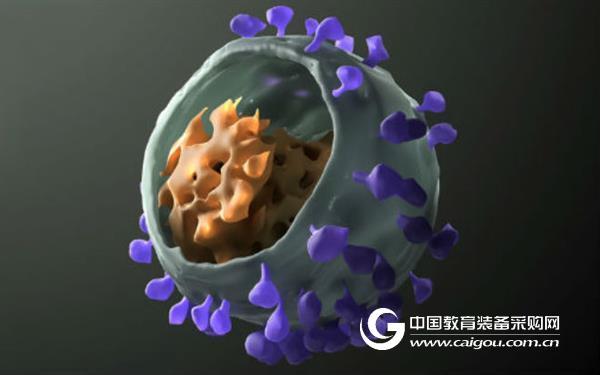 """Science:""""3合1""""新抗体,有效对抗多种HIV"""